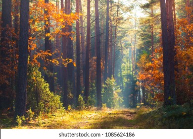 Autumn forest scene. Vivid morning in colorful forest with sun rays through trees. Gold foliage and footpath in autumn forest. - Shutterstock ID 1085624186