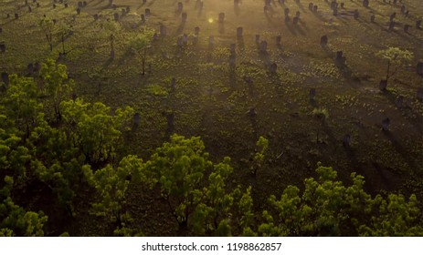 Autumn forest scenery with rays of warm light. Mistic forest.