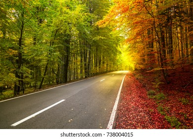 Autumn forest scenery with rays of warm light illuminating the gold foliage. Concept of two seasons, summer and autumn.