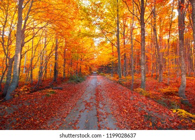 Autumn forest scenery with road of fall leaves & warm light illumining the gold foliage. Footpath in scene autumn forest nature. Vivid october day in colorful forest. Uludag, Bursa, Turkey.