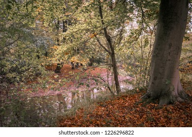 Autumn forest scenery with small flowing brook