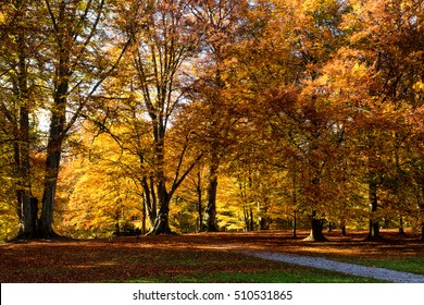 autumn forest scenic