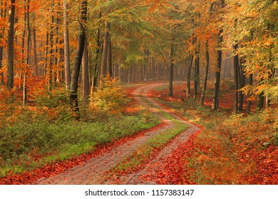 Autumn forest seasonal landscape nature background with country road