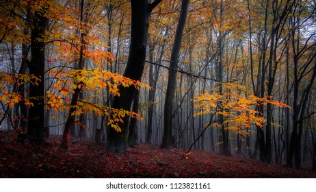 Autumn Forest Slovakia