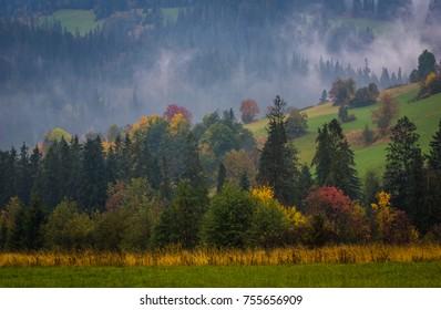 Autumn forest somewhere in Tatra mountains, Poland