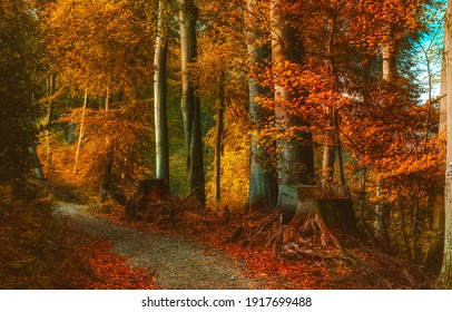Autumn Forest In The Autumn Stock Photo