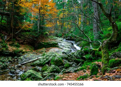 Autumn forest with stones and moss in the bavarian forest