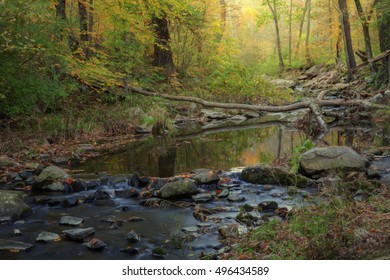 Autumn forest stream on a dreamy day