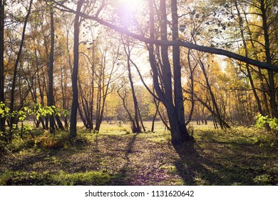 Autumn forest in the sun