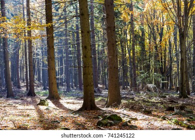 Autumn forest in the sun.