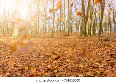 Autumn in the forest with sun in the background
