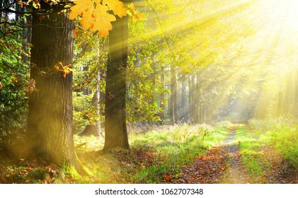 Autumn in the forest with the sun rays.