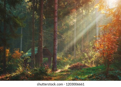 Autumn forest with sun rays and wooden blockhouse pavilion. Warm weather in pine forest scenery view with log house in bushes.