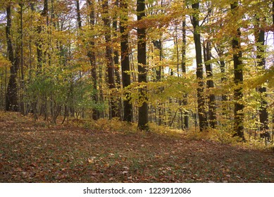 Autumn forest in the sunlight