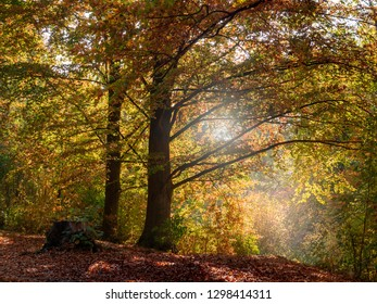 Autumn forest in the sunlight.