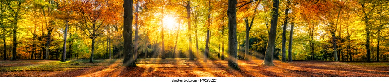 Autumn forest in sunlight with beautiful autumn foliage as panorama background - Shutterstock ID 1492938224