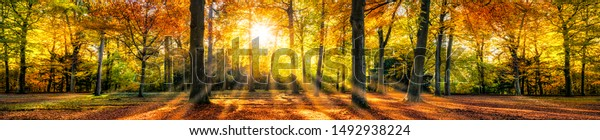 Autumn forest in sunlight with beautiful autumn foliage as panorama background