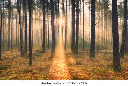 Autumn forest. Sunny autumnal scene. Sun shines through trees at yellow grass.