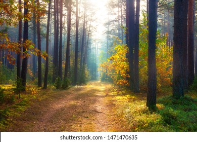 Autumn forest. Sunny forest in october. Scenic nature landscape. Beautiful woodland