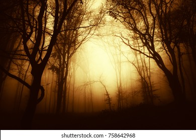 autumn forest at sunset, mysterious foggy landscape