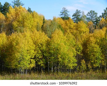 Temperate zone images stock photos vectors shutterstock autumn forest in the temperate zone altavistaventures Image collections