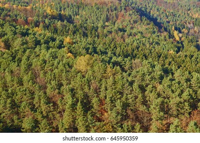 Autumn forest top view landscape. Trees top view, forest background. Aerial view of the forest. Forest from air.