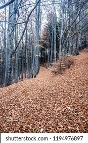 autumn forest with trail covered by fallen leaves bellow Velka Kykula hill in Moravskoslezske Beskydy mountains