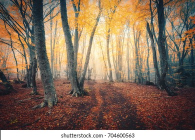 Autumn forest with trail in fog. Colorful landscape with beautiful enchanted trees with yellow and red leaves on the branches. Amazing scene with mystical foggy forest. Fall colors. Fairy wood. Nature
