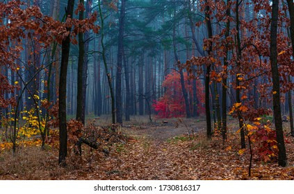 Autumn forest. Traveling along forest roads. Autumn colors adorned the trees. Light fog creates fabulous scenes.