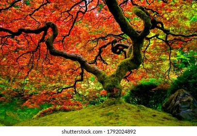 Autumn forest tree fairytale landscape