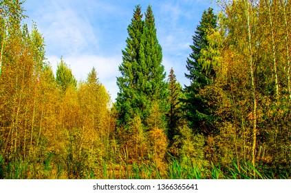 Autumn forest trees background. Autumn forrest trees view. Autumn forest background. Autumn forrest background