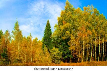 Autumn forest trees landscape. Autumn forrest trees view. Autumn forrest background. Autumn forest trees view