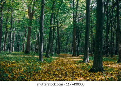 autumn forest trees. nature gold wood sunlight backgrounds.