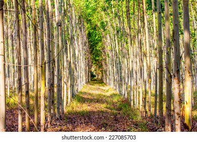 Autumn forest trees. nature green wood