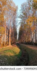 autumn forest trees path leaves landscape