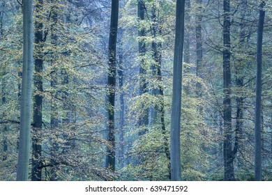 Autumn forest in twilight