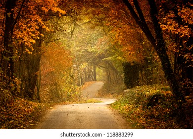 Autumn forest with way
