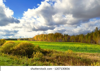 autumn forest with yellow leaves in front of a colza field, landscape with beautiful sky and nature