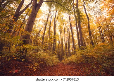 Autumn forest. Yellow leaves. Great Forest. Concept of the Autumn