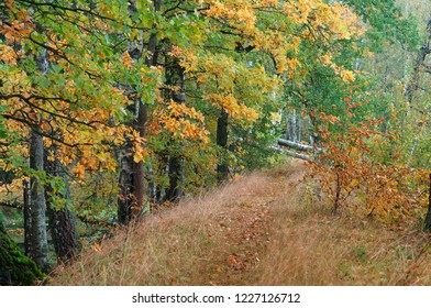 autumn forest, yellow and red trees in autumn