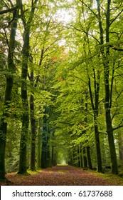 autumn forrest path