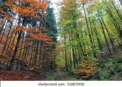 Autumn forrest with a path and trees in red colors on the left side and green colors on the right side