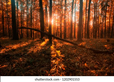 Autumn forrest slovakia  indian summer