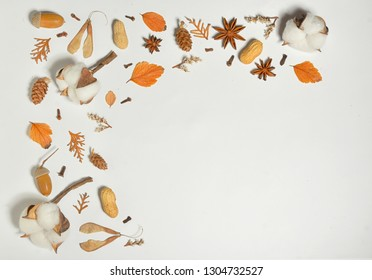 Autumn frame with cotton buds on white paper