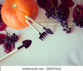 autumn frame design. still life of pumpkin, black grapes, autumn red leaves and garden tools