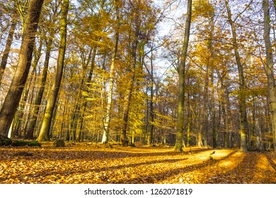 autumn in frankfurt city forest