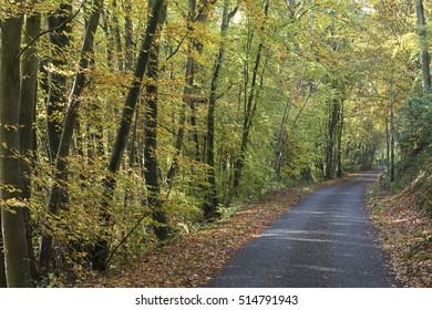 autumn in french undergrowth
