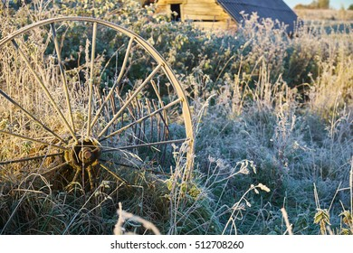 Autumn frost and sun in village, frost on grass close-up