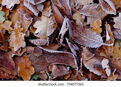Autumn frozen leaves background