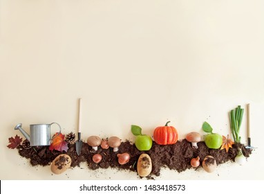 Autumn fruits growing in soil patch background